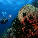 dive_newquay_expedition_azores_006