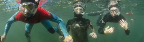 Boat dive Today 21/09/2015